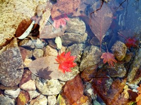 Leaves want to swim, too.