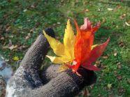 Korean Autumn in Naejangsa