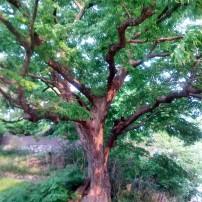 So many beautiful trees
