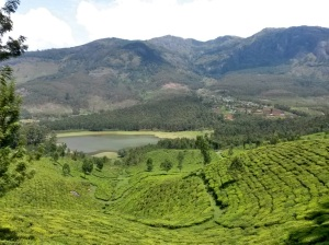 Endless Tea Fields in Munnar