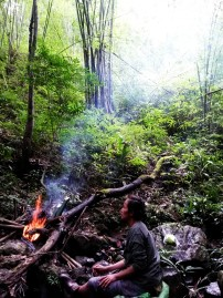 Pinan Tea in the lovely forest