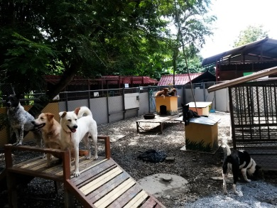 Dozens of dogs live in the main yard