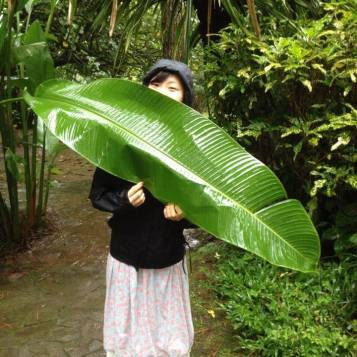 banana leaf in cianjur, indonesia