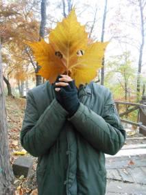 leaf in korea