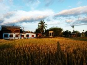 Running through rice fields in Don Det, Laos
