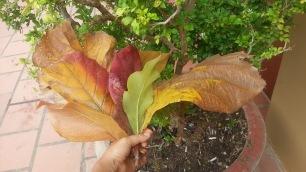 Love my leaf bouquet in Kampot, Cambodia