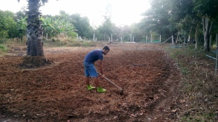 volunteer organic farm thailand