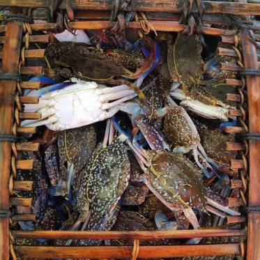 Crab market in Kep