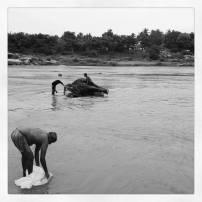 Elephant bathing time in Hampi