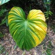 Whyanbeel Arboretum