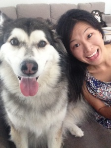 housesitting huskies sydney australia