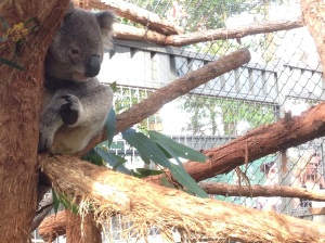 Koala hospital port macquarie