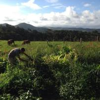 Voluntary work on an organic farm in Australia HelpX Workaway WWOOF