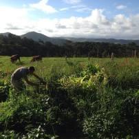 Voluntary work on an organic farm in Australia HelpX Workaway WWOOF